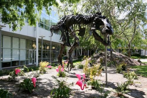 Google T-Rex Skeleton