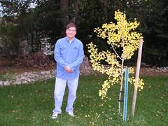 My Ginko Tree