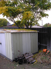 Shed, Wood and Compost Piles
