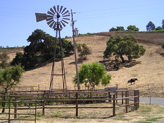 Weather Vane and Cow