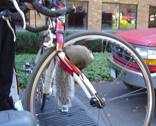 squirrel death by bike