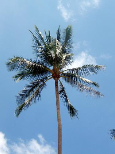 Palm @ Bo Phut, Thailand
