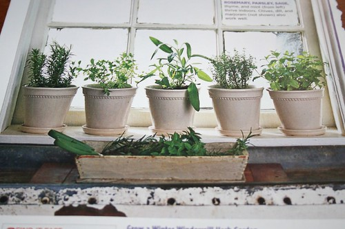 How cute these would look on my kitchen windowsill