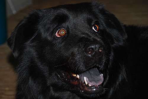 The Happy Newfie!