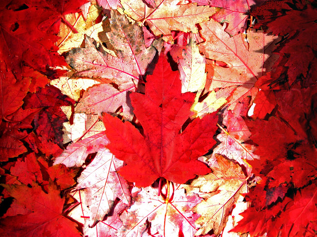 Numa Falls Canada Wallpaper Canadian Maple Leaf Flickr Photo Sharing