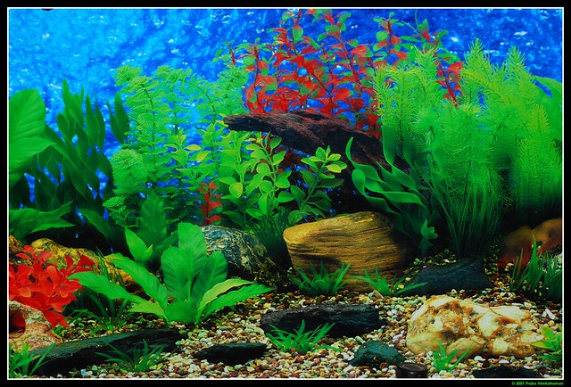 backgrounds for fish tanks printable free