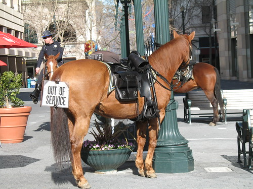 San Jose police horse: Out of service
