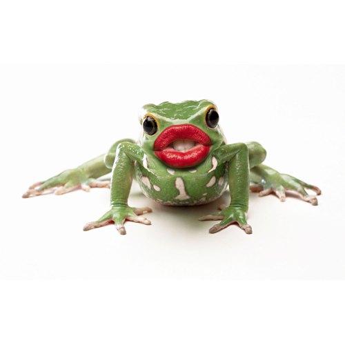 Medium Crop Of Kiss That Frog
