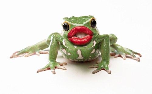 Beauteous Kiss That Kiss That A Photo On Flickriver Kiss That Frog Warehouse Sale 2017 Kiss That Frog Mugs