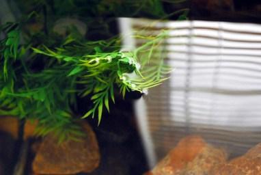 artificial aquarium plant