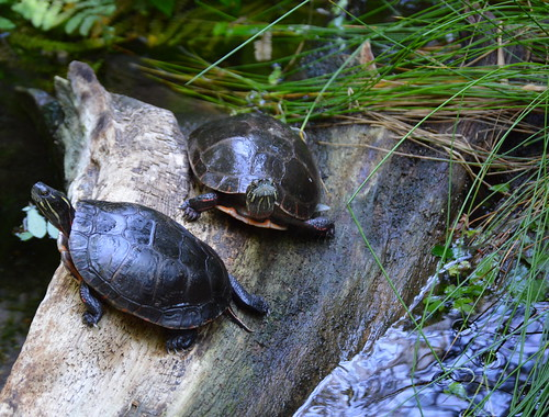 biodome_turtles