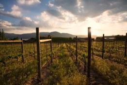 Quidni Estate Winery 69