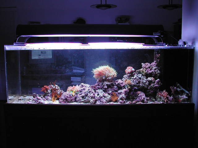100 Gallon Reef Aquarium | Taking a picture of my whole tank