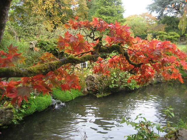 leanign branch