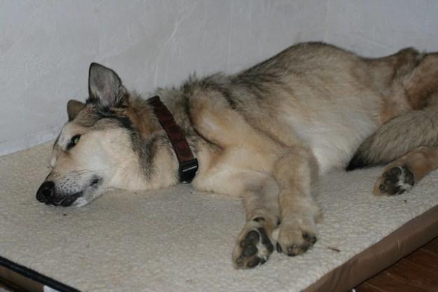Zeke, 1/30/2007 9:30 pm