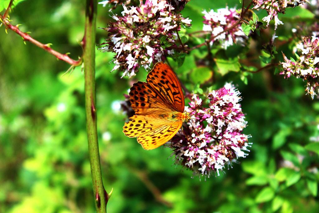 Imagen gratis de una mariposa sobre una flor