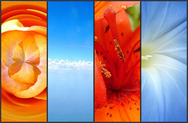 Colors That Compliment Orange Complementary Colors Orange & Blue | Flickr - Photo Sharing!