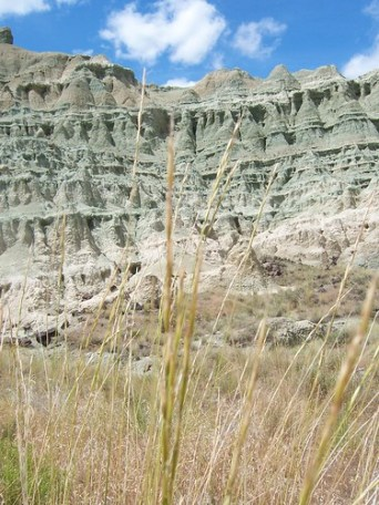 john day fossil bed area