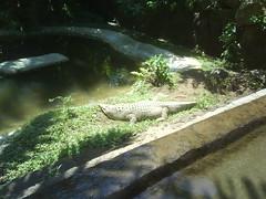 Taman Safari Puncak