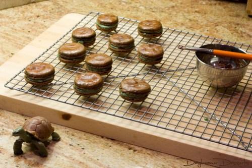 Tortoise Macarons