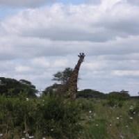 Schöne Urlaubsziele in Afrika