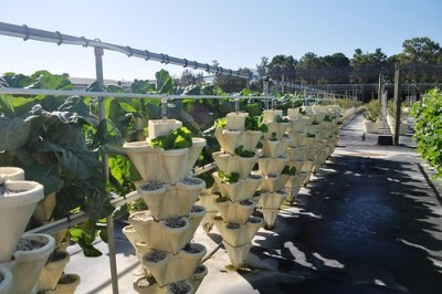 Vegetable Plants at Hydro-Taste, a Hydroponic U-Pick Farm in Myakka City, Fla.