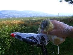 bikewash 088