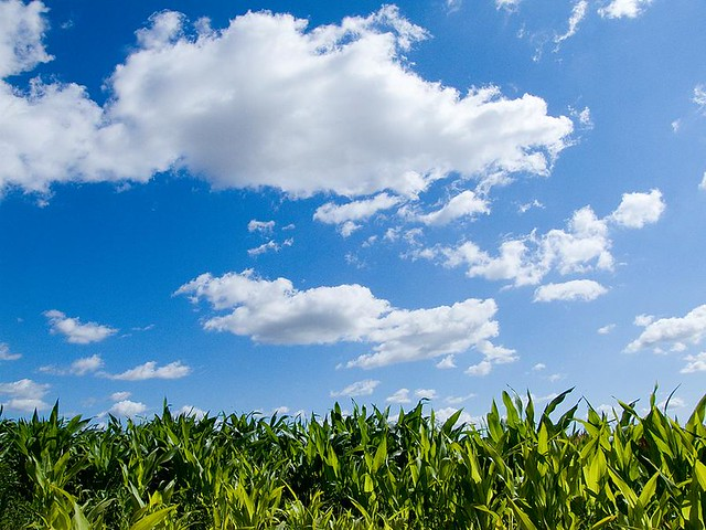 Garden Jardin Sky And Corn, Grange Farm, Abbots Ripton, Huntingdon. The