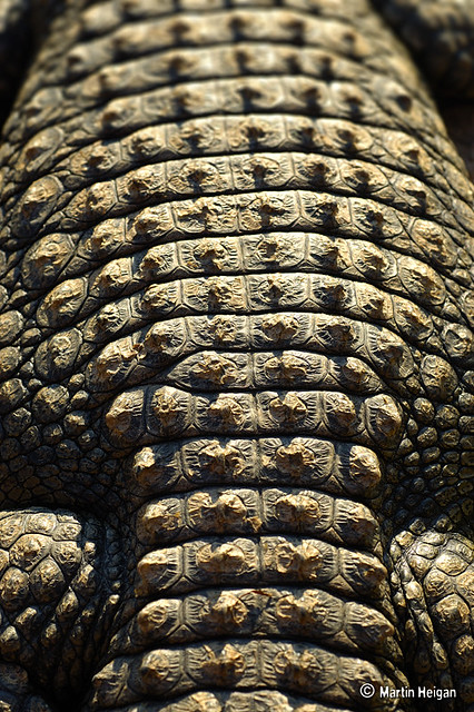 Beautiful Animal Pictures Wallpaper Nile Crocodile Skin Macro The Skin Texture Of A Nile