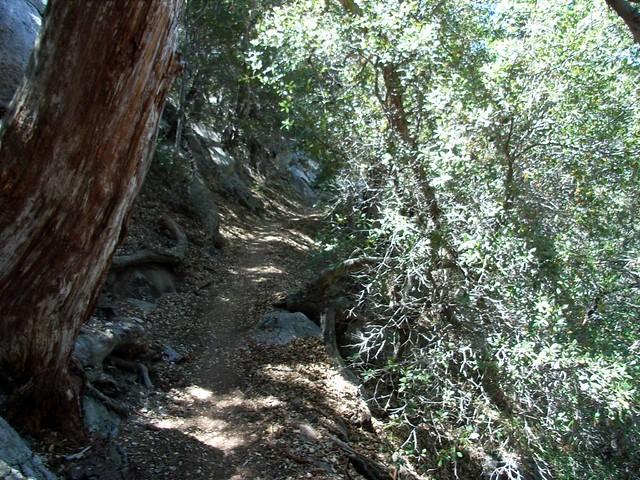 Mount Wilson 019