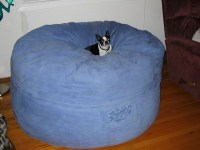 Biggest dog bed ever   Explore goldynkat's photos on ...