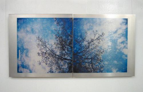 Magnolias - Image transfer on aluminum