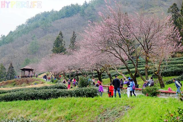 合歡山&武陵農場 (37)