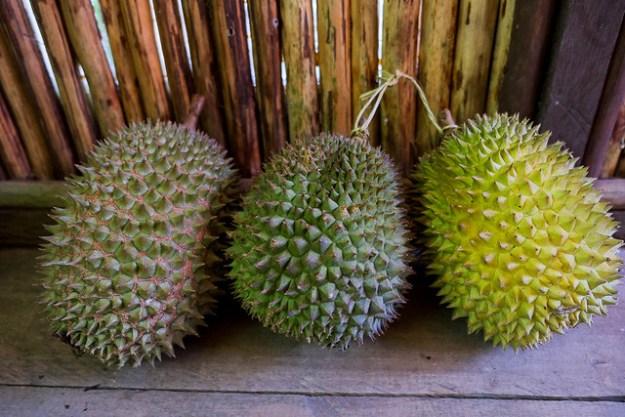 Sweet Durians. Saparua