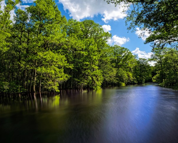 Into the Suwannee River