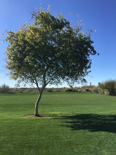 A thinking tree