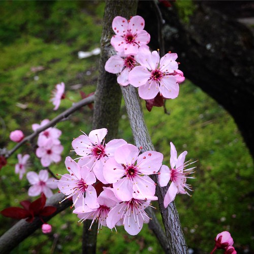 Tiny pink blossoms