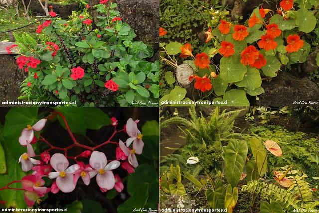 Collage 3 Flores Jardín Botánico Tau Kiani