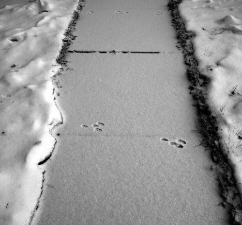 Prints in the Snow