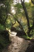 Morning Hike | Pinnacles National Park