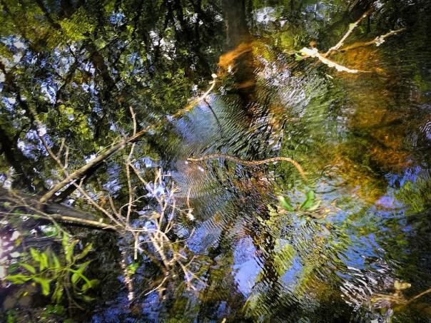 Florida Brown Water Snake