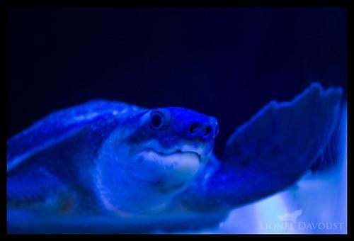 Turtle says hi