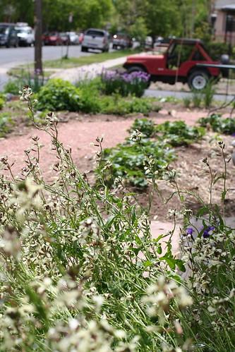 Neighbor's amazing garden