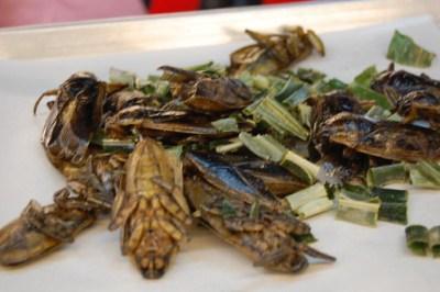 Fried Giant Water Beetles
