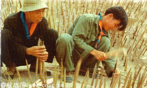 Pièges de bambou positionnés par des soldats vietnamiens.