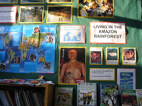 rainforest3