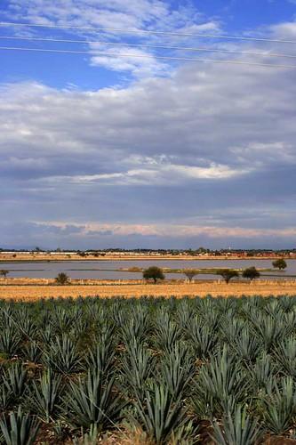 paisaje AGAVE