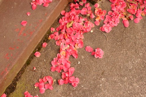 pink petals on pavement