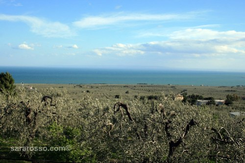 Olive trees and the Sea in Puglia