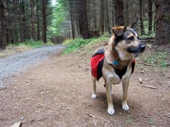 barkley on hike